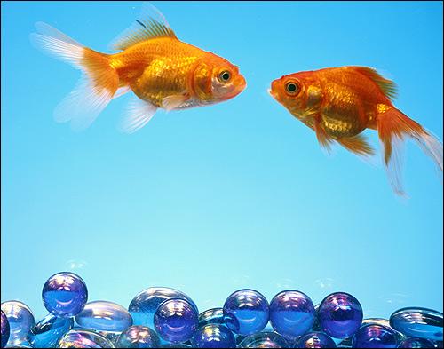 Выбор аквариума тип и форма